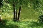 Nature Etang